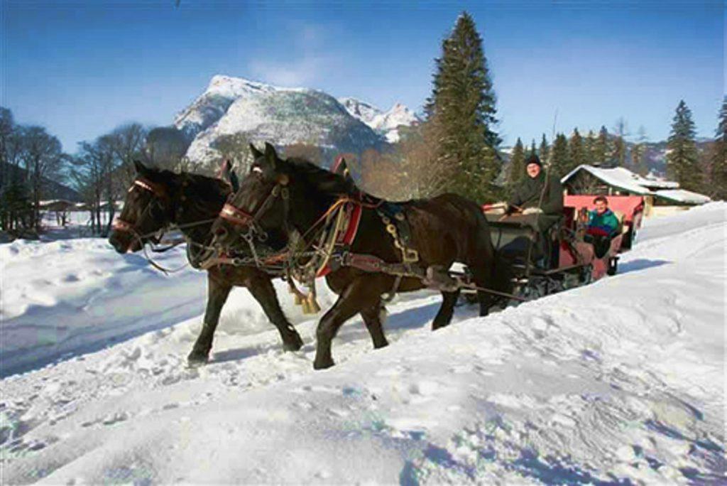 sania-cai-iarna