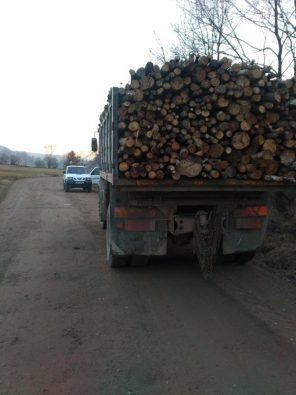 lemne-confiscate-jandarmi-noiembrie-2016-1