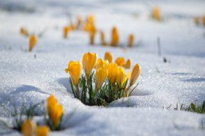 primavara iarna
